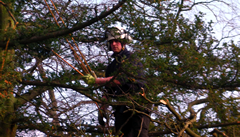 FallHills Firewodd tree surgery picture