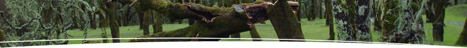 01-treesurgery