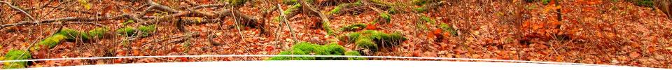 03-treesurgery