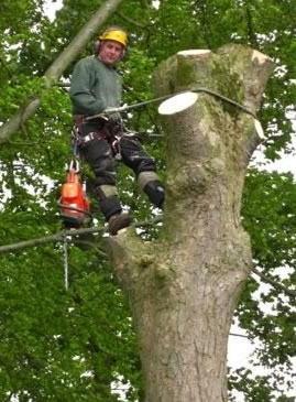 Tree Surgery in Midlothian